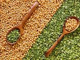Bohnen, Leinsamen, Linsen, Kichererbsen, Erbsen und andere landwirtschaftliche Produkte. - photo 2