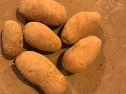 Fresh potatoes: Breeze , Manifesto - perfect quality - photo 2