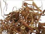 Лекарственные травы - фото 7