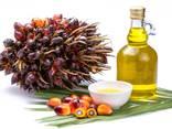 Пальмовое масло - photo 3