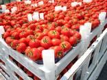 Tomato - фото 1